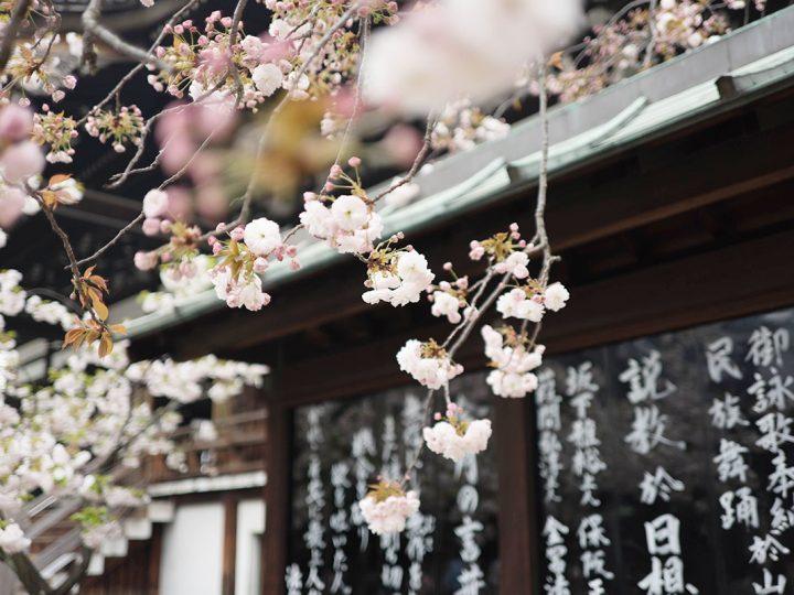 Ricelovers insolites #4 – Nami et la cuisine japonaise du quotidien